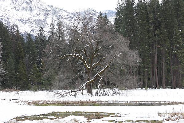 Yosemite Memories 2011